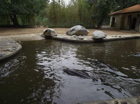 hippo pool 187 zoo de la palmyre gallery