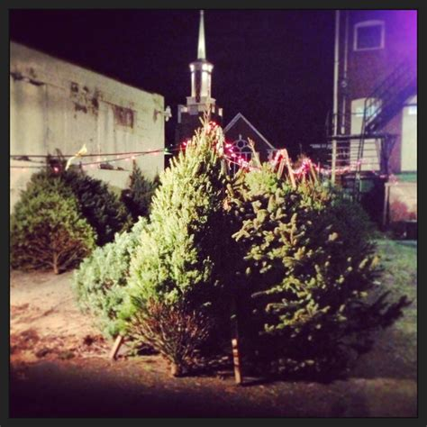 christmas tree lot ideas tree lot in williamsport pa tree lots and