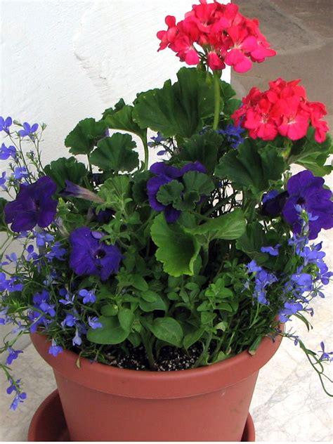 amazing annual flower planting ideas colorado alpines