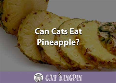 dogs eat pineapple can cats eat pineapple leaves cats
