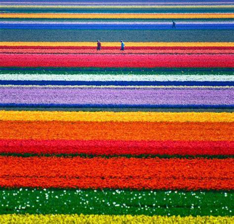fiori olanda l olanda e i fiori viaggi fantastici