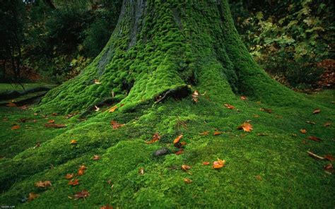 lawn and landscape tips from the turf doctor don t let moss grow under your feet