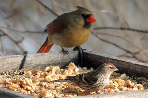pin by steve frye on wild bird photos from steve s north