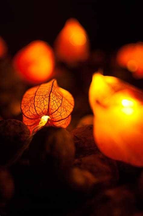 Led Fairy Lights In Physalis Things To Make Pinterest Make Your Own String Lights