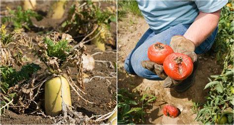 When Should I Plant My Vegetable Garden When Should I Plant My Vegetable Garden Talentneeds
