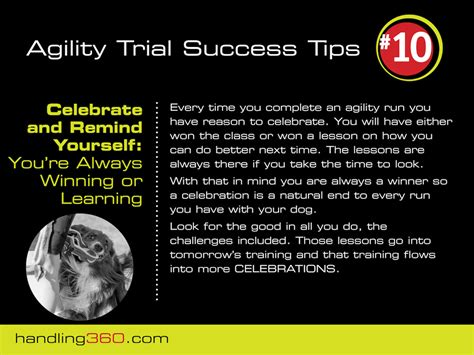 the best ever picture hanging tip celebrate every day be your best in agility tip 10 celebrate the end of