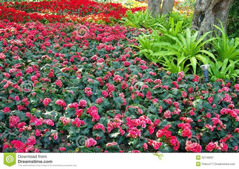 nice flower garden nice flower decoration garden royalty free stock