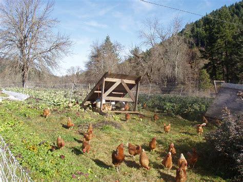 Outdoor C sun c chicken farm outdoor