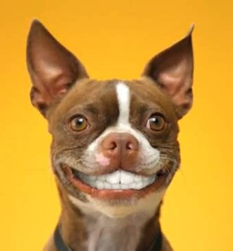 why do dogs smile smile the narcissistic anthropologist