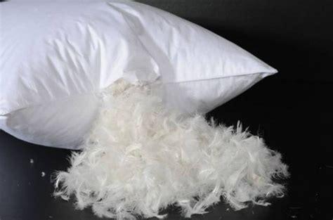 almohadas de plumas plumas una sufrida belleza humano vegano