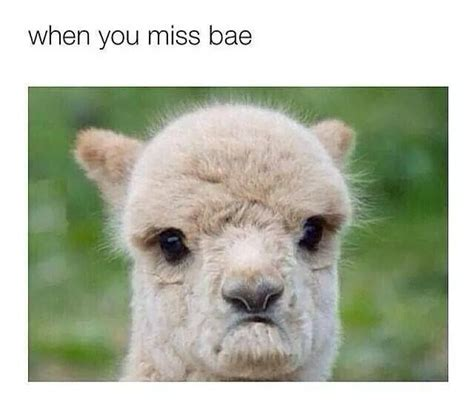 when you miss bae shit i like duh pinterest laughing so hard laughing and my life