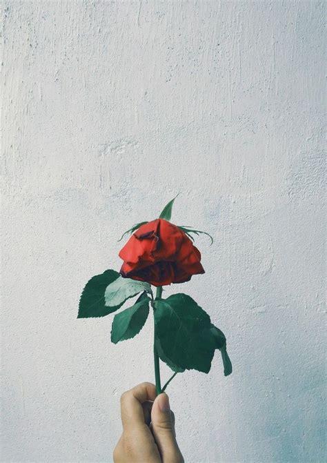 wallpaper tumblr bunga mawar