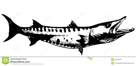 barracuda fish i vector stock vector image 47543618