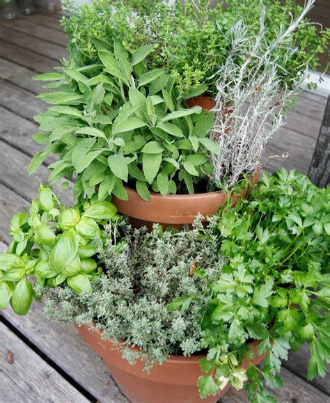 giardino erbe aromatiche idee salvaspazio per un giardino di erbe aromatiche in balcone
