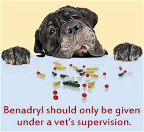 giving benadryl should you give benadryl to your pet