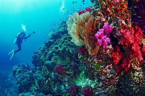 dive site best scuba diving in thailand dive you just can t miss