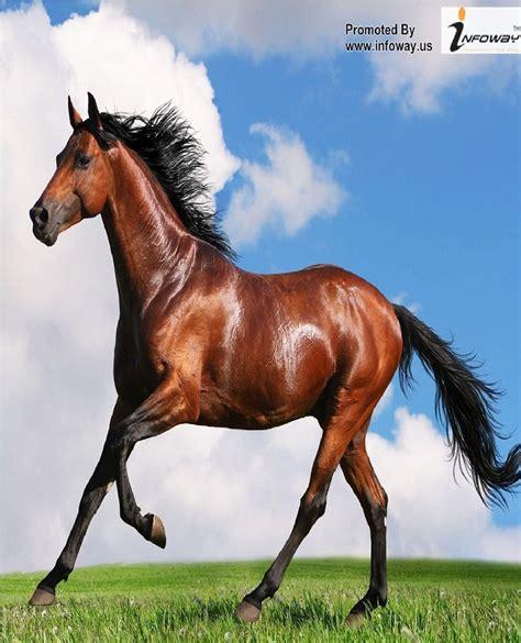 wallpaper iphone 6 horse running horse wallpaper high resolution