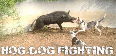 hog dogs hog rodeos arm investigations