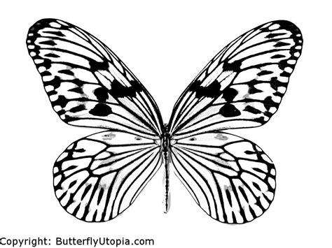 real butterfly coloring pages butterfly coloring pages butterfly crafts page drawings