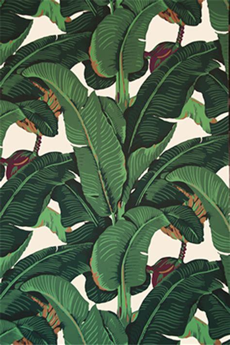 wallpaper martinique banana leaf martinique wallpaper accept no substitutes historical