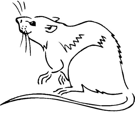 free coloring pages of a rat