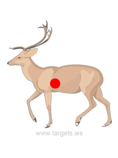 printable deer vital targets deer shooting target hanters pinterest shooting