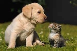 australian shepherd names cat gallery 171 puppies plus dogs