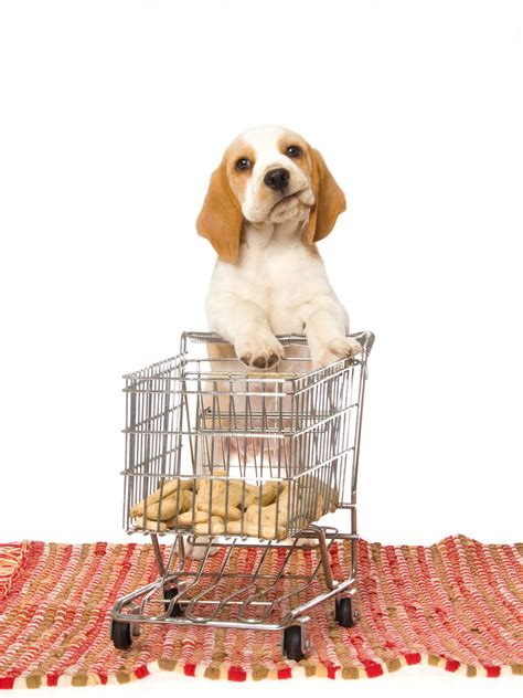puppy shopping shopping images