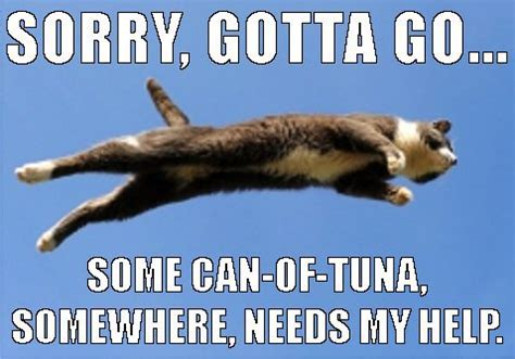 Flying Cat Meme - flying cat meme image 3314018 by helena888 on favim com