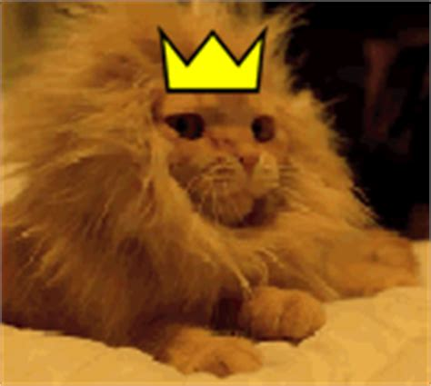 cat gifs cat king gif find on giphy