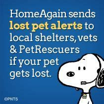 lost pet pr is a resource for missing pets around our
