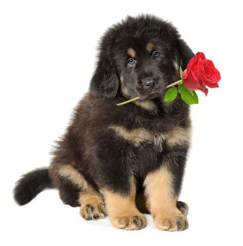 dibujo de cachorro con una flor en la boca para colorear imagenes de perritos con flores en la boca imagui
