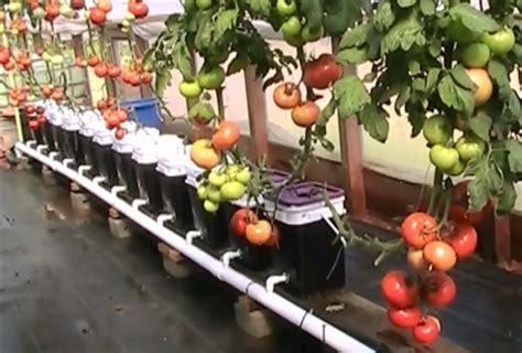Jual Alat Hidroponik Di Kudus belajar menanam hidroponik cara menanam sayuran