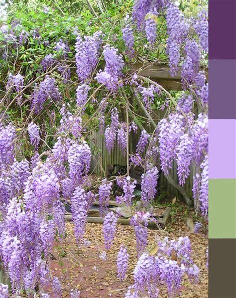 wisteria color wisteria color palette colors