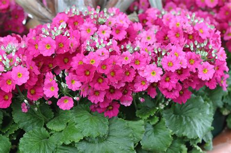 fiori inverno i fiori dell autunno inverno floricoltura michielin