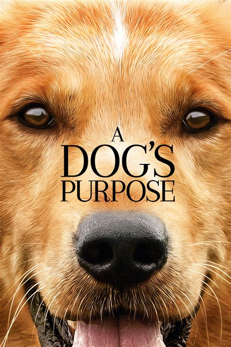 the dogs purpose what s new eastlink