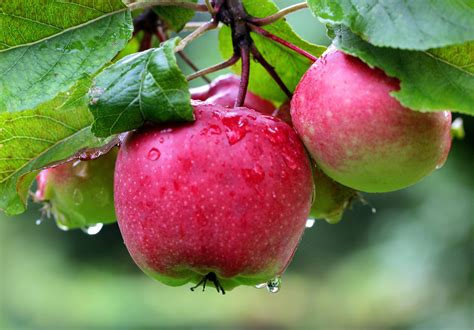 apple orchard best places to go apple picking near orange county 171 cbs