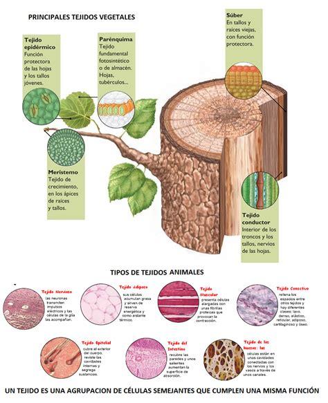 tejidos animales y vegetales opiniones de tejidos vegetales