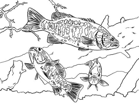 bass fish coloring pages for adults coloring pages