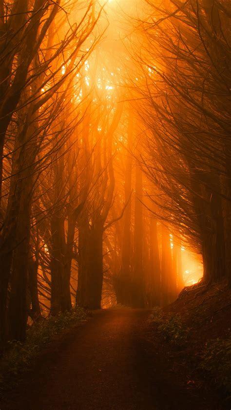 wallpaper trees light orange forest sunset  nature