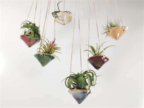best small hanging plants how to care for the lovely air plants that adorn your home