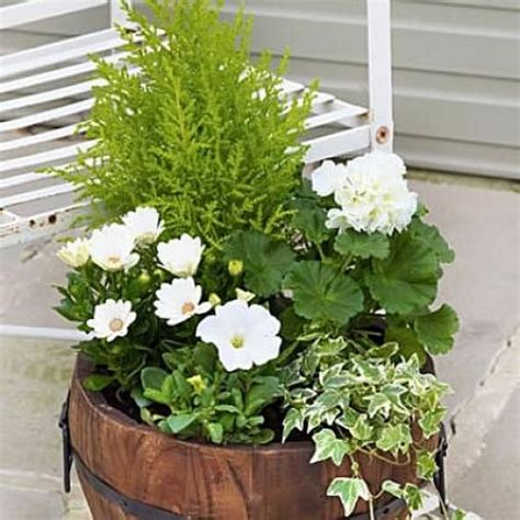 Planter Mix by Mixed Summer Outdoor Planter Will Make A Lovely Feature
