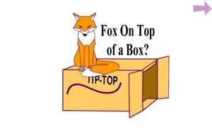 fox sits on a box