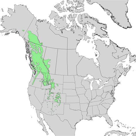 range map file abies lasiocarpa range map 1 png