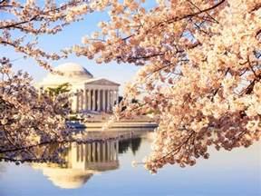 national cherry blossom festival national cherry blossom festival arts and culture travelchannel com travel channel