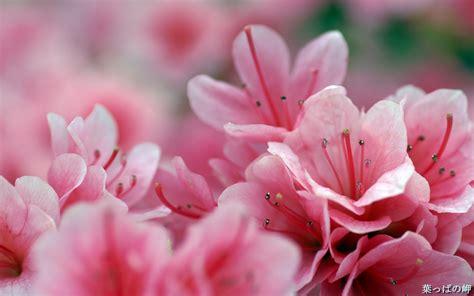 imagenes rosas en hd fondos pantallas flores taringa