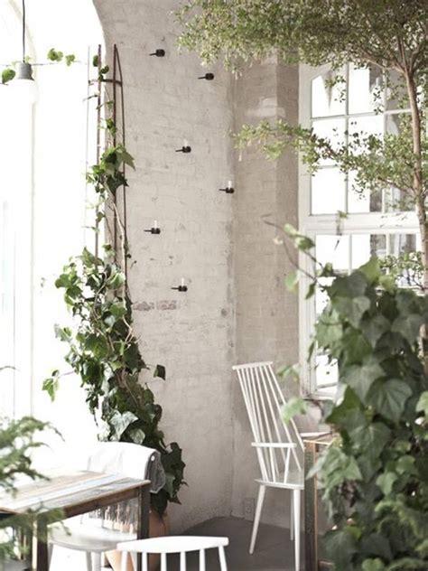 edera da appartamento piante ricanti ricanti caratteristiche piante
