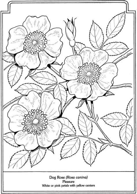 coloring page of dogwood flowers pintura em tecido passo a passo riscos florais para
