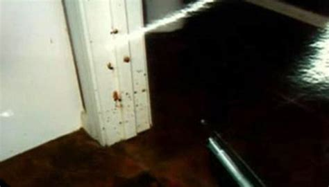 travis alexander wiki travis alexander crime scene picture