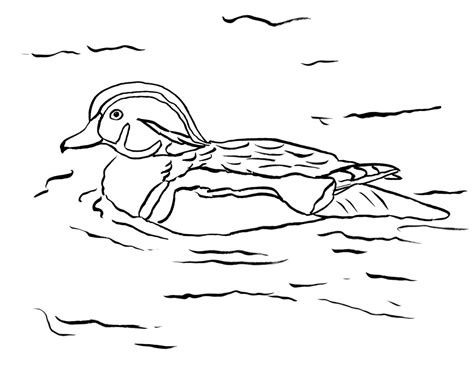 wood duck coloring page art starts  kids